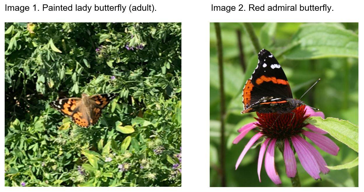 Butterflies_CAPTIONS.JPG