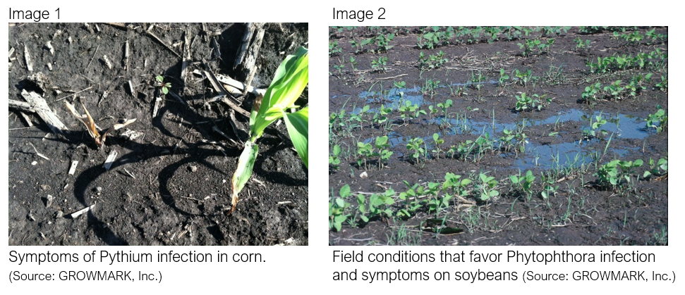 PlantingConditions-Diseases-2.PNG
