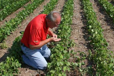 SAMPLING FOR SOYBEAN CYST NEMATODES (SCN)
